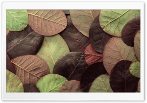 Leafy Pattern HD Wide Wallpaper for Widescreen