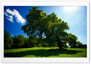 Leaning Tree HD Wide Wallpaper for Widescreen