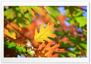 Leaves HD Wide Wallpaper for 4K UHD Widescreen desktop & smartphone