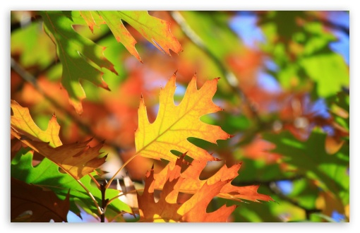 Leaves HD wallpaper for Wide 16:10 5:3 Widescreen WHXGA WQXGA WUXGA WXGA WGA ; HD 16:9 High Definition WQHD QWXGA 1080p 900p 720p QHD nHD ; Standard 4:3 5:4 3:2 Fullscreen UXGA XGA SVGA QSXGA SXGA DVGA HVGA HQVGA devices ( Apple PowerBook G4 iPhone 4 3G 3GS iPod Touch ) ; Tablet 1:1 ; iPad 1/2/Mini ; Mobile 4:3 5:3 3:2 16:9 5:4 - UXGA XGA SVGA WGA DVGA HVGA HQVGA devices ( Apple PowerBook G4 iPhone 4 3G 3GS iPod Touch ) WQHD QWXGA 1080p 900p 720p QHD nHD QSXGA SXGA ;