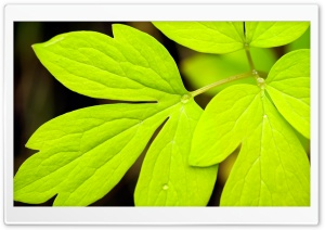 Leaves 5 HD Wide Wallpaper for Widescreen