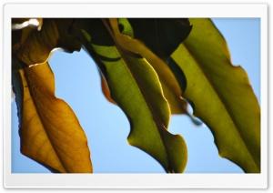 Leaves Ultra HD Wallpaper for 4K UHD Widescreen desktop, tablet & smartphone