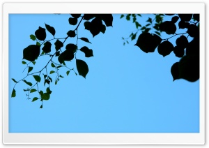 Leaves and Sky HD Wide Wallpaper for Widescreen
