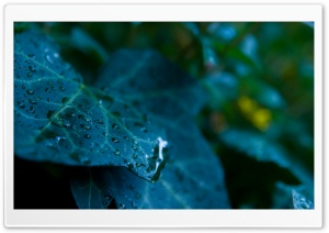 Leaves And Water Drops HD Wide Wallpaper for Widescreen