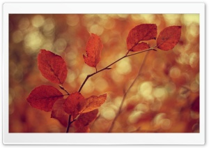 Leaves Bokeh HD Wide Wallpaper for Widescreen
