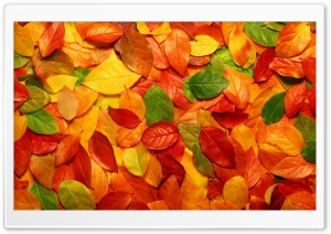 Leaves Carpet HD Wide Wallpaper for Widescreen