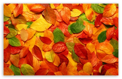 Leaves Carpet HD wallpaper for Wide 16:10 5:3 Widescreen WHXGA WQXGA WUXGA WXGA WGA ; HD 16:9 High Definition WQHD QWXGA 1080p 900p 720p QHD nHD ; Standard 4:3 5:4 3:2 Fullscreen UXGA XGA SVGA QSXGA SXGA DVGA HVGA HQVGA devices ( Apple PowerBook G4 iPhone 4 3G 3GS iPod Touch ) ; Tablet 1:1 ; iPad 1/2/Mini ; Mobile 4:3 5:3 3:2 16:9 5:4 - UXGA XGA SVGA WGA DVGA HVGA HQVGA devices ( Apple PowerBook G4 iPhone 4 3G 3GS iPod Touch ) WQHD QWXGA 1080p 900p 720p QHD nHD QSXGA SXGA ; Dual 16:10 5:3 16:9 4:3 5:4 WHXGA WQXGA WUXGA WXGA WGA WQHD QWXGA 1080p 900p 720p QHD nHD UXGA XGA SVGA QSXGA SXGA ;