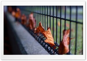Leaves Caught In The Fence HD Wide Wallpaper for 4K UHD Widescreen desktop & smartphone