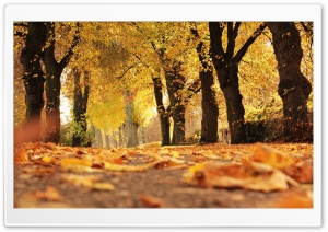 Leaves Fall Off Trees HD Wide Wallpaper for 4K UHD Widescreen desktop & smartphone