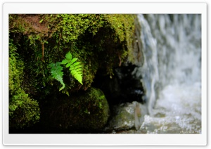 Leaves in the Waterfall HD Wide Wallpaper for Widescreen