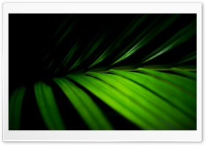 Leaves Macro HD Wide Wallpaper for Widescreen