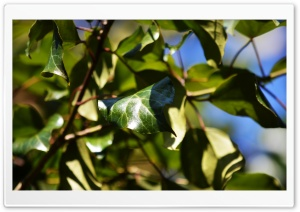 Leaves on a Sunny Spring Day HD Wide Wallpaper for Widescreen