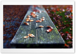 Leaves On The Bench HD Wide Wallpaper for Widescreen
