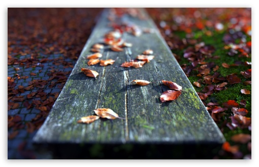 Leaves On The Bench ❤ 4K UHD Wallpaper for Wide 16:10 5:3 Widescreen WHXGA WQXGA WUXGA WXGA WGA ; 4K UHD 16:9 Ultra High Definition 2160p 1440p 1080p 900p 720p ; Standard 4:3 5:4 3:2 Fullscreen UXGA XGA SVGA QSXGA SXGA DVGA HVGA HQVGA ( Apple PowerBook G4 iPhone 4 3G 3GS iPod Touch ) ; Tablet 1:1 ; iPad 1/2/Mini ; Mobile 4:3 5:3 3:2 16:9 5:4 - UXGA XGA SVGA WGA DVGA HVGA HQVGA ( Apple PowerBook G4 iPhone 4 3G 3GS iPod Touch ) 2160p 1440p 1080p 900p 720p QSXGA SXGA ; Dual 16:10 5:3 16:9 4:3 5:4 WHXGA WQXGA WUXGA WXGA WGA 2160p 1440p 1080p 900p 720p UXGA XGA SVGA QSXGA SXGA ;