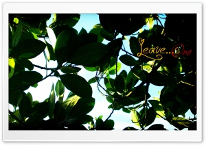 Leaves One HD Wide Wallpaper for Widescreen