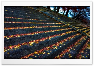 Leaves Resting On Steps HD Wide Wallpaper for Widescreen