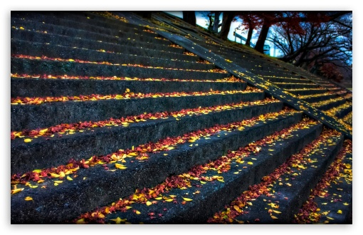 Leaves Resting On Steps HD wallpaper for Wide 16:10 5:3 Widescreen WHXGA WQXGA WUXGA WXGA WGA ; HD 16:9 High Definition WQHD QWXGA 1080p 900p 720p QHD nHD ; Standard 4:3 5:4 3:2 Fullscreen UXGA XGA SVGA QSXGA SXGA DVGA HVGA HQVGA devices ( Apple PowerBook G4 iPhone 4 3G 3GS iPod Touch ) ; Tablet 1:1 ; iPad 1/2/Mini ; Mobile 4:3 5:3 3:2 16:9 5:4 - UXGA XGA SVGA WGA DVGA HVGA HQVGA devices ( Apple PowerBook G4 iPhone 4 3G 3GS iPod Touch ) WQHD QWXGA 1080p 900p 720p QHD nHD QSXGA SXGA ;