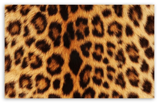 Leopard ❤ 4K UHD Wallpaper for Wide 16:10 5:3 Widescreen WHXGA WQXGA WUXGA WXGA WGA ; 4K UHD 16:9 Ultra High Definition 2160p 1440p 1080p 900p 720p ; Standard 4:3 5:4 3:2 Fullscreen UXGA XGA SVGA QSXGA SXGA DVGA HVGA HQVGA ( Apple PowerBook G4 iPhone 4 3G 3GS iPod Touch ) ; Smartphone 5:3 WGA ; Tablet 1:1 ; iPad 1/2/Mini ; Mobile 4:3 5:3 3:2 16:9 5:4 - UXGA XGA SVGA WGA DVGA HVGA HQVGA ( Apple PowerBook G4 iPhone 4 3G 3GS iPod Touch ) 2160p 1440p 1080p 900p 720p QSXGA SXGA ;