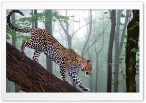 Leopard In Jungle HD Wide Wallpaper for Widescreen