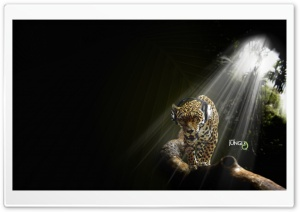 Leopard Listening Music Audio Jungle HD Wide Wallpaper for Widescreen
