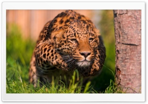 Leopard Running HD Wide Wallpaper for 4K UHD Widescreen desktop & smartphone