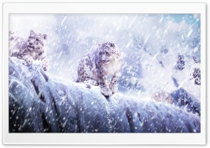 Leopards In The Snow HD Wide Wallpaper for Widescreen