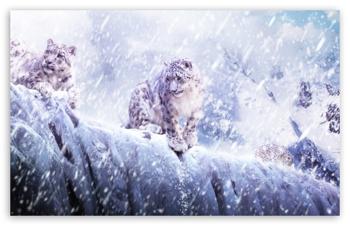 Leopards In The Snow HD wallpaper for Wide 16:10 5:3 Widescreen WHXGA WQXGA WUXGA WXGA WGA ; HD 16:9 High Definition WQHD QWXGA 1080p 900p 720p QHD nHD ; Standard 4:3 5:4 3:2 Fullscreen UXGA XGA SVGA QSXGA SXGA DVGA HVGA HQVGA devices ( Apple PowerBook G4 iPhone 4 3G 3GS iPod Touch ) ; Tablet 1:1 ; iPad 1/2/Mini ; Mobile 4:3 5:3 3:2 16:9 5:4 - UXGA XGA SVGA WGA DVGA HVGA HQVGA devices ( Apple PowerBook G4 iPhone 4 3G 3GS iPod Touch ) WQHD QWXGA 1080p 900p 720p QHD nHD QSXGA SXGA ; Dual 5:4 QSXGA SXGA ;