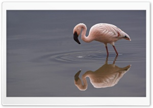 Lesser Flamingo Lake Nakuru National Park Kenya HD Wide Wallpaper for Widescreen