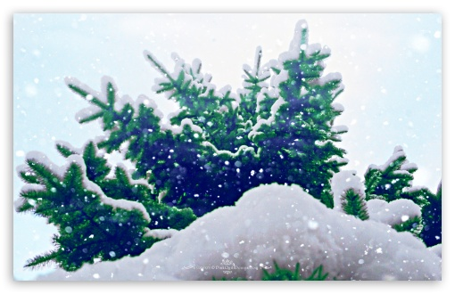 Let it Snow HD wallpaper for Standard 4:3 5:4 Fullscreen UXGA XGA SVGA QSXGA SXGA ; Wide 16:10 5:3 Widescreen WHXGA WQXGA WUXGA WXGA WGA ; HD 16:9 High Definition WQHD QWXGA 1080p 900p 720p QHD nHD ; Other 3:2 DVGA HVGA HQVGA devices ( Apple PowerBook G4 iPhone 4 3G 3GS iPod Touch ) ; Mobile VGA WVGA iPhone iPad PSP Phone - VGA QVGA Smartphone ( PocketPC GPS iPod Zune BlackBerry HTC Samsung LG Nokia Eten Asus ) WVGA WQVGA Smartphone ( HTC Samsung Sony Ericsson LG Vertu MIO ) HVGA Smartphone ( Apple iPhone iPod BlackBerry HTC Samsung Nokia ) Sony PSP Zune HD Zen ; Tablet 2 Android ;