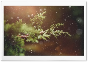 Let It Snow Background HD Wide Wallpaper for Widescreen