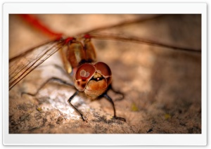 Libellula HD Wide Wallpaper for Widescreen