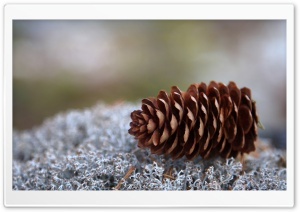 Lichens And Pine Cone HD Wide Wallpaper for Widescreen