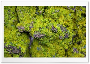 Lichens On Rock HD Wide Wallpaper for 4K UHD Widescreen desktop & smartphone