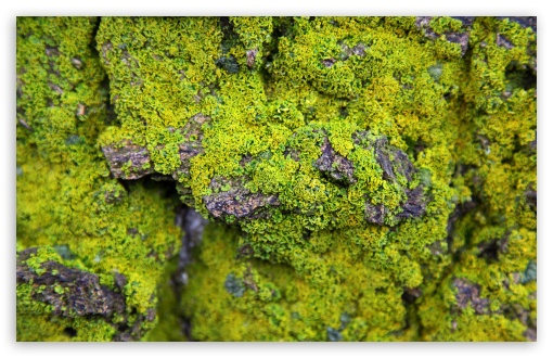 Lichens On Rock ❤ 4K UHD Wallpaper for Wide 16:10 5:3 Widescreen WHXGA WQXGA WUXGA WXGA WGA ; 4K UHD 16:9 Ultra High Definition 2160p 1440p 1080p 900p 720p ; UHD 16:9 2160p 1440p 1080p 900p 720p ; Standard 4:3 5:4 3:2 Fullscreen UXGA XGA SVGA QSXGA SXGA DVGA HVGA HQVGA ( Apple PowerBook G4 iPhone 4 3G 3GS iPod Touch ) ; Smartphone 5:3 WGA ; Tablet 1:1 ; iPad 1/2/Mini ; Mobile 4:3 5:3 3:2 16:9 5:4 - UXGA XGA SVGA WGA DVGA HVGA HQVGA ( Apple PowerBook G4 iPhone 4 3G 3GS iPod Touch ) 2160p 1440p 1080p 900p 720p QSXGA SXGA ;
