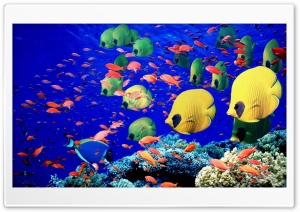 Life Below The Red Sea Egypt HD Wide Wallpaper for Widescreen