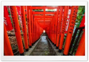 Light at the End of the Torii HD Wide Wallpaper for Widescreen