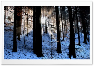 Light Beams In The Forest, Winter HD Wide Wallpaper for Widescreen