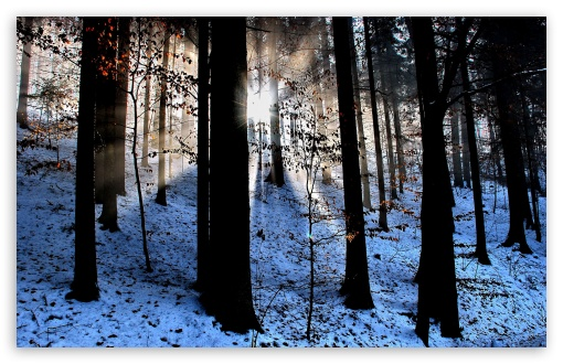 Light Beams In The Forest, Winter HD wallpaper for Wide 16:10 5:3 Widescreen WHXGA WQXGA WUXGA WXGA WGA ; HD 16:9 High Definition WQHD QWXGA 1080p 900p 720p QHD nHD ; Standard 4:3 5:4 3:2 Fullscreen UXGA XGA SVGA QSXGA SXGA DVGA HVGA HQVGA devices ( Apple PowerBook G4 iPhone 4 3G 3GS iPod Touch ) ; Tablet 1:1 ; iPad 1/2/Mini ; Mobile 4:3 5:3 3:2 16:9 5:4 - UXGA XGA SVGA WGA DVGA HVGA HQVGA devices ( Apple PowerBook G4 iPhone 4 3G 3GS iPod Touch ) WQHD QWXGA 1080p 900p 720p QHD nHD QSXGA SXGA ; Dual 16:10 5:3 4:3 5:4 WHXGA WQXGA WUXGA WXGA WGA UXGA XGA SVGA QSXGA SXGA ;