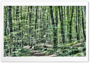 Light Between Trees Jordans Beech Wood HD Wide Wallpaper for Widescreen