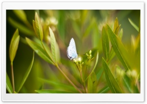 Light Blue Butterfly HD Wide Wallpaper for 4K UHD Widescreen desktop & smartphone