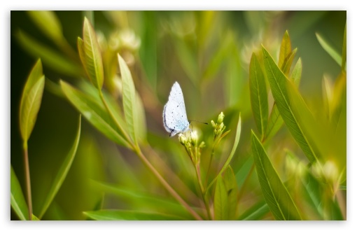Light Blue Butterfly HD wallpaper for Wide 16:10 5:3 Widescreen WHXGA WQXGA WUXGA WXGA WGA ; HD 16:9 High Definition WQHD QWXGA 1080p 900p 720p QHD nHD ; Standard 4:3 5:4 3:2 Fullscreen UXGA XGA SVGA QSXGA SXGA DVGA HVGA HQVGA devices ( Apple PowerBook G4 iPhone 4 3G 3GS iPod Touch ) ; Tablet 1:1 ; iPad 1/2/Mini ; Mobile 4:3 5:3 3:2 16:9 5:4 - UXGA XGA SVGA WGA DVGA HVGA HQVGA devices ( Apple PowerBook G4 iPhone 4 3G 3GS iPod Touch ) WQHD QWXGA 1080p 900p 720p QHD nHD QSXGA SXGA ; Dual 16:10 5:3 16:9 4:3 5:4 WHXGA WQXGA WUXGA WXGA WGA WQHD QWXGA 1080p 900p 720p QHD nHD UXGA XGA SVGA QSXGA SXGA ;