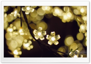 Light Flowers HD Wide Wallpaper for Widescreen