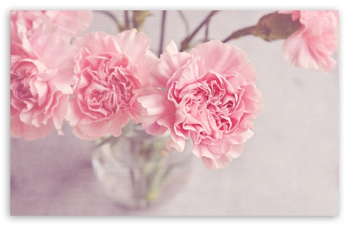 Light Pink Carnations Flowers in a Vase ❤ 4K UHD Wallpaper for Wide 16:10 5:3 Widescreen WHXGA WQXGA WUXGA WXGA WGA ; 4K UHD 16:9 Ultra High Definition 2160p 1440p 1080p 900p 720p ; Standard 4:3 5:4 3:2 Fullscreen UXGA XGA SVGA QSXGA SXGA DVGA HVGA HQVGA ( Apple PowerBook G4 iPhone 4 3G 3GS iPod Touch ) ; Smartphone 5:3 WGA ; Tablet 1:1 ; iPad 1/2/Mini ; Mobile 4:3 5:3 3:2 16:9 5:4 - UXGA XGA SVGA WGA DVGA HVGA HQVGA ( Apple PowerBook G4 iPhone 4 3G 3GS iPod Touch ) 2160p 1440p 1080p 900p 720p QSXGA SXGA ; Dual 16:10 5:3 4:3 5:4 WHXGA WQXGA WUXGA WXGA WGA UXGA XGA SVGA QSXGA SXGA ;