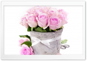 Light Pink Roses HD Wide Wallpaper for Widescreen