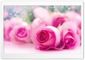 Light Pink Roses Bokeh HD Wide Wallpaper for Widescreen