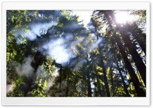 Light Through The Trees HD Wide Wallpaper for Widescreen