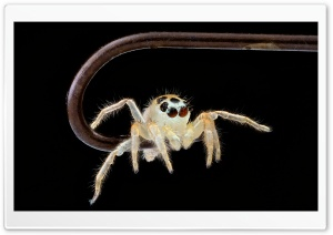 Lil Spider HD Wide Wallpaper for 4K UHD Widescreen desktop & smartphone