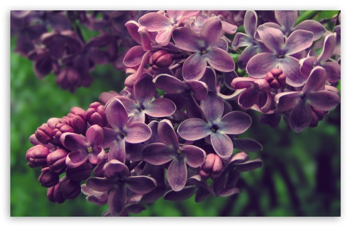Lilac ❤ 4K UHD Wallpaper for Wide 16:10 5:3 Widescreen WHXGA WQXGA WUXGA WXGA WGA ; 4K UHD 16:9 Ultra High Definition 2160p 1440p 1080p 900p 720p ; Standard 4:3 5:4 3:2 Fullscreen UXGA XGA SVGA QSXGA SXGA DVGA HVGA HQVGA ( Apple PowerBook G4 iPhone 4 3G 3GS iPod Touch ) ; Tablet 1:1 ; iPad 1/2/Mini ; Mobile 4:3 5:3 3:2 16:9 5:4 - UXGA XGA SVGA WGA DVGA HVGA HQVGA ( Apple PowerBook G4 iPhone 4 3G 3GS iPod Touch ) 2160p 1440p 1080p 900p 720p QSXGA SXGA ;