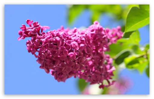Lilac ❤ 4K UHD Wallpaper for Wide 16:10 5:3 Widescreen WHXGA WQXGA WUXGA WXGA WGA ; 4K UHD 16:9 Ultra High Definition 2160p 1440p 1080p 900p 720p ; UHD 16:9 2160p 1440p 1080p 900p 720p ; Standard 4:3 5:4 3:2 Fullscreen UXGA XGA SVGA QSXGA SXGA DVGA HVGA HQVGA ( Apple PowerBook G4 iPhone 4 3G 3GS iPod Touch ) ; Smartphone 5:3 WGA ; Tablet 1:1 ; iPad 1/2/Mini ; Mobile 4:3 5:3 3:2 16:9 5:4 - UXGA XGA SVGA WGA DVGA HVGA HQVGA ( Apple PowerBook G4 iPhone 4 3G 3GS iPod Touch ) 2160p 1440p 1080p 900p 720p QSXGA SXGA ;