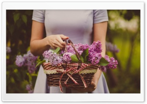 Lilac Blossoms Ultra HD Wallpaper for 4K UHD Widescreen desktop, tablet & smartphone